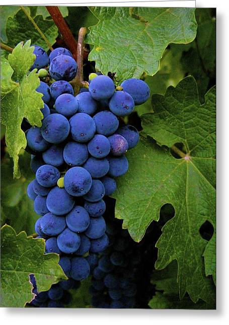 Fall Grass Greeting Cards - Wine Grapes Greeting Card by Michael Blesius