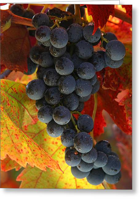 Sonoma County Vineyards. Greeting Cards - Wine Grapes on the Vine Greeting Card by TB Sojka