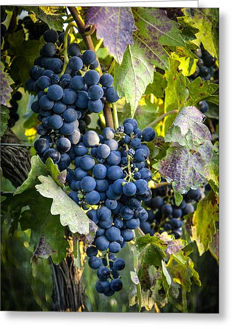 Tetyana Kokhanets Greeting Cards - Wine Grapes Greeting Card by Tetyana Kokhanets