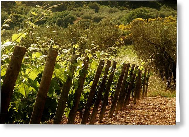 Wine Growing Pouring And Enjoying  Greeting Card by Christine Burdine