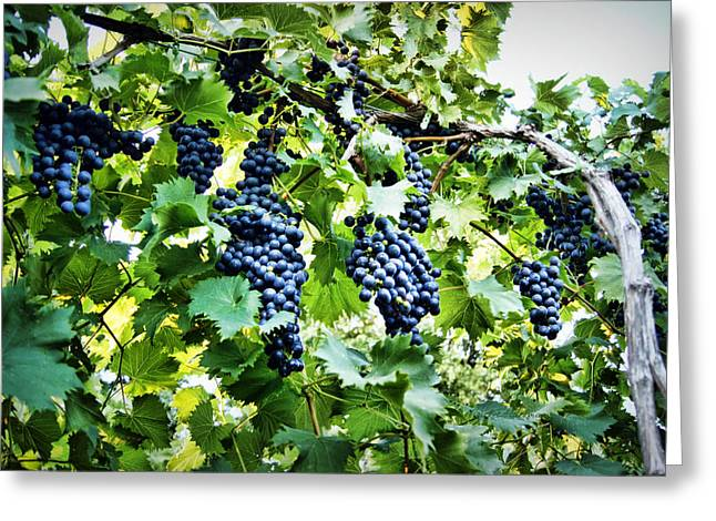 Grapevine Red Leaf Photographs Greeting Cards - Wine on the Vine Greeting Card by Cricket Hackmann