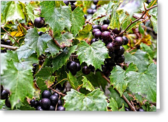 Chiefland Greeting Cards - Wine On The Vine Greeting Card by Marilyn Holkham