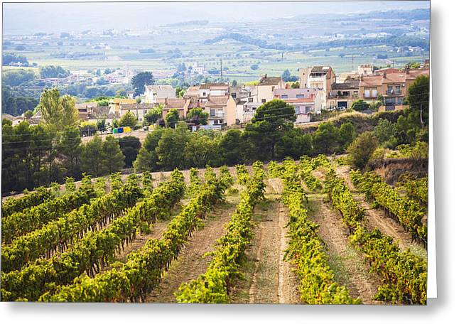 Fermentation Photographs Greeting Cards - Winemaking In The Largest Wine Region Greeting Card by Carlos Sanchez Pereyra