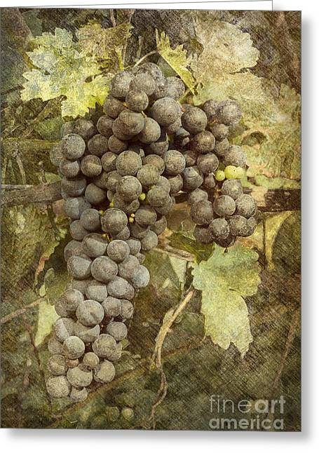Grapevines Greeting Cards - Winery Grapes Greeting Card by Carrie Cranwill