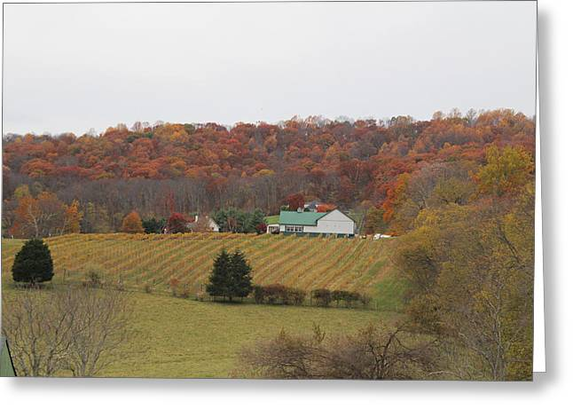 Winery In Virginia At Fall Greeting Card by Renee Braun