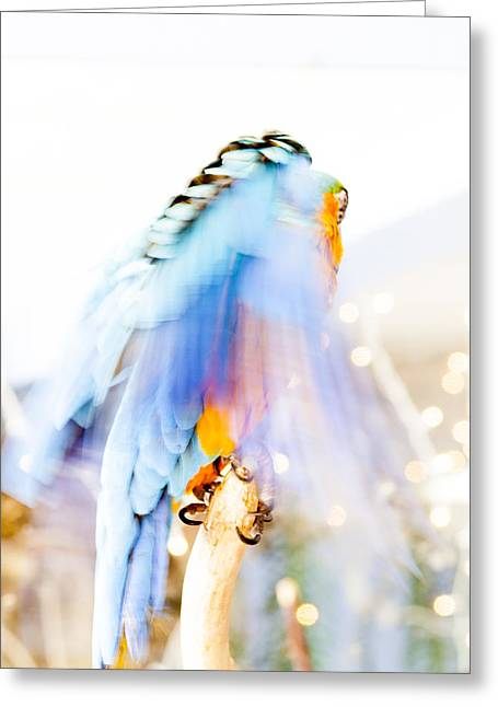 Daysray Photography Greeting Cards - Wing Dream Greeting Card by Fran Riley
