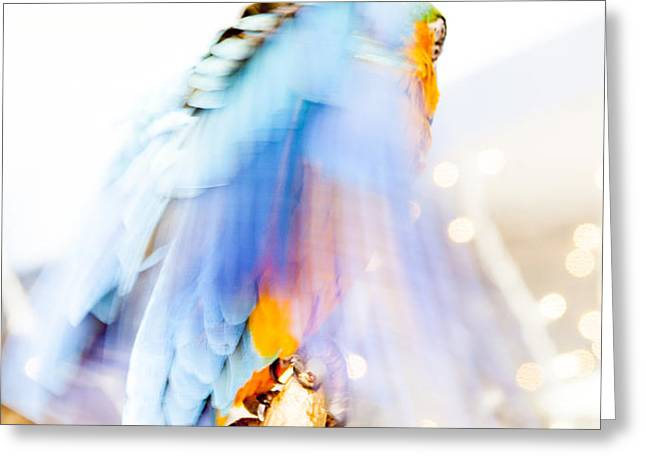 Wing Dream Greeting Card by Fran Riley