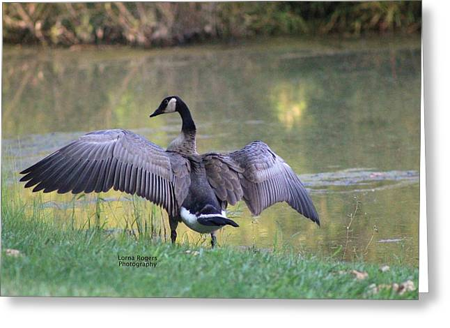 Canadian Pyrography Greeting Cards - Wing Span Greeting Card by Lorna Rogers Photography