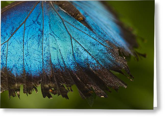 Colorful Photos Greeting Cards - Winged Beauty - Butterfly Photography Greeting Card by Laria Saunders