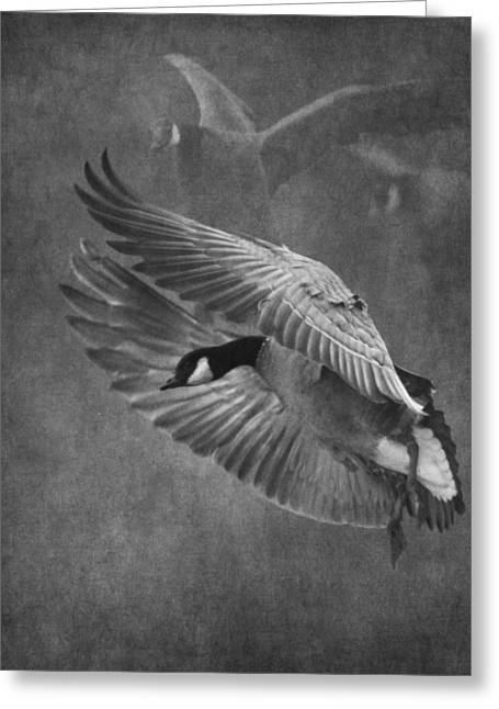Dusky Greeting Cards - Winged Symphony Greeting Card by Angie Vogel