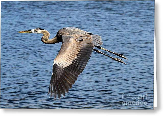 St Joseph Peninsula State Park Greeting Cards - Wings Greeting Card by Adam Jewell