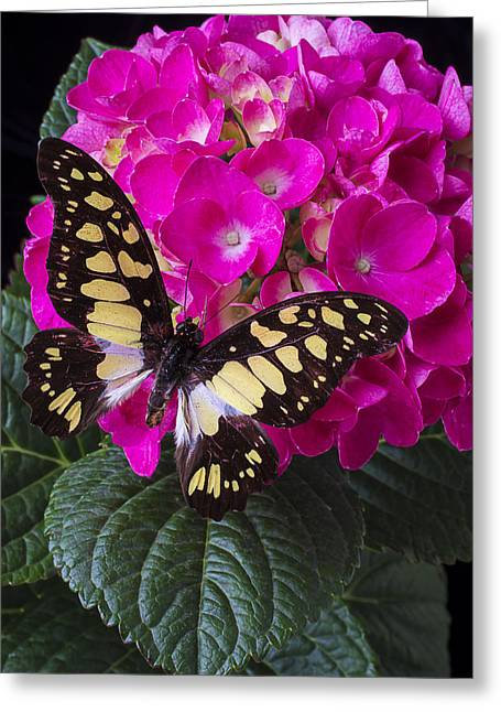 Yellow Butterfly Greeting Cards - Wings At Rest Greeting Card by Garry Gay