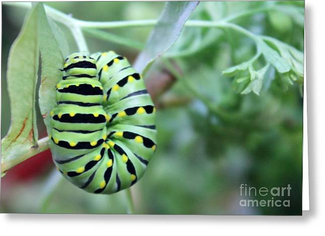 Bug Framed Prints Greeting Cards - Wings Coming Soon Greeting Card by Lauren Blazer