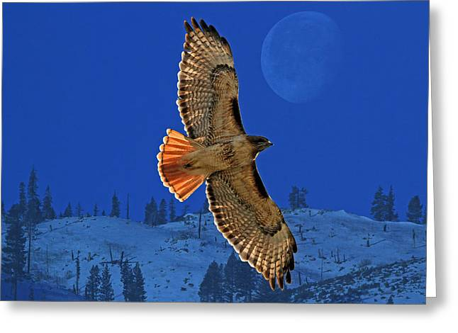 Birds Moon Greeting Cards - Wings Greeting Card by Donna Kennedy