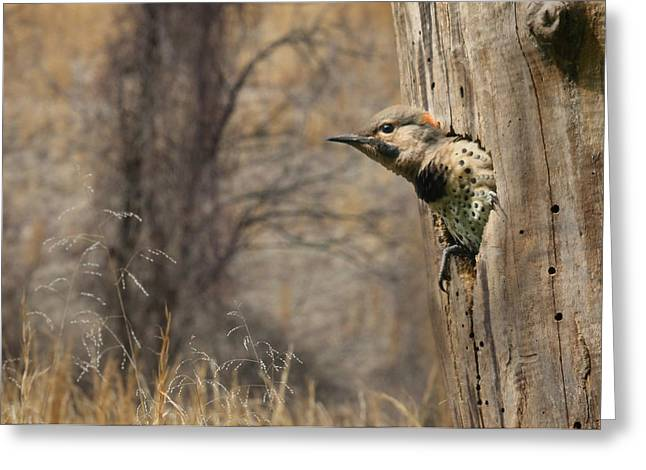 Flicker Greeting Cards - Wings Greeting Card by Lori Deiter