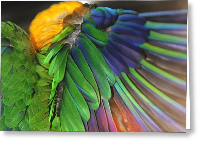Andrea Lazar Greeting Cards - Wings of a Conure Greeting Card by  Andrea Lazar