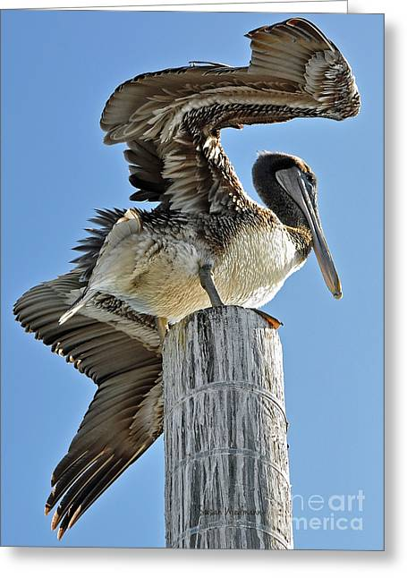 Susan Wiedmann Greeting Cards - Wings of a Pelican Greeting Card by Susan Wiedmann
