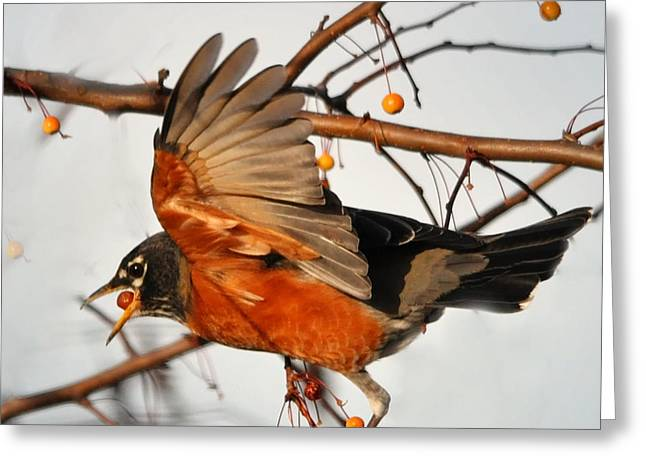 Nava Jo Thompson Greeting Cards - Wings of a Robin Greeting Card by Nava  Thompson