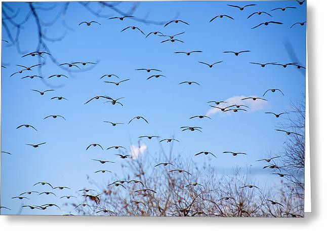 Gaggle Greeting Cards - Wings of Many Greeting Card by Marilyn Hunt