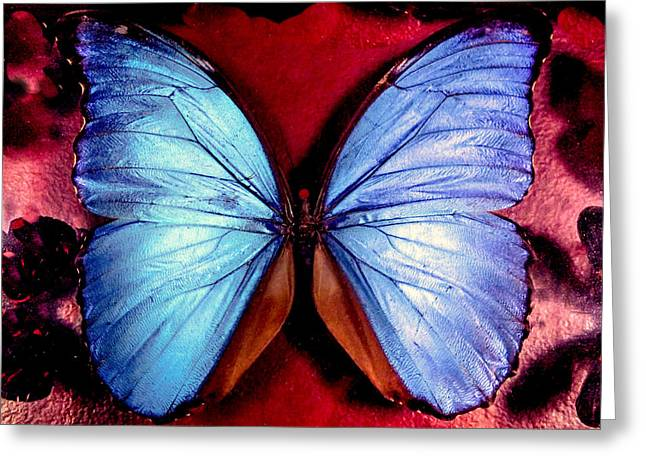 Wings Of Nature Greeting Card by Karen Wiles