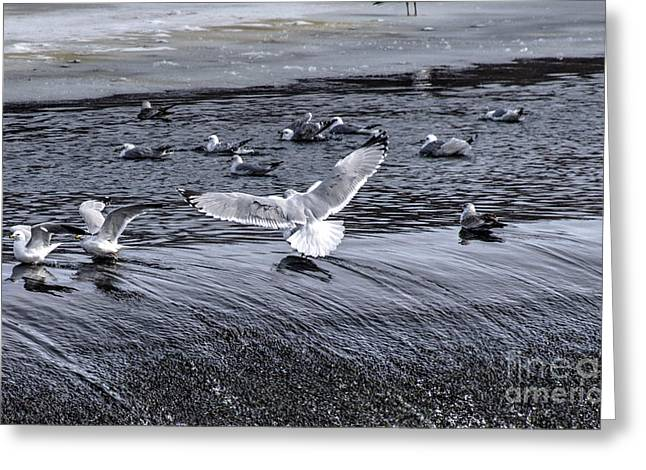 Williams Dam Greeting Cards - Wingspan - Birds Greeting Card by Mark Ayzenberg