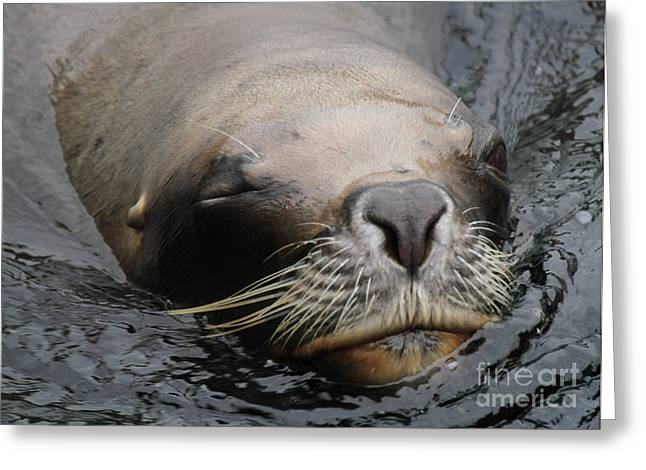 Sea Lions Greeting Cards - Wink Greeting Card by Four Hands Art