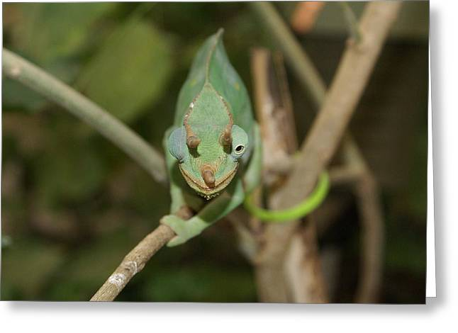 Animate Object Greeting Cards - Wink from a lizard Greeting Card by Kenneth Summers