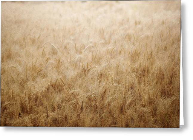 Wheat Art Greeting Cards - Winsome Wheat Greeting Card by Amy Tyler