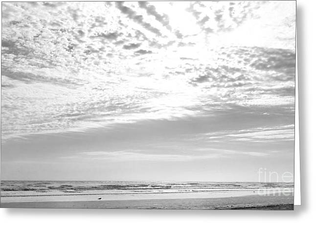 Michelle Greeting Cards - Winter Afternoon St Augustine Anastasia Island Florida Greeting Card by Michelle Wiarda