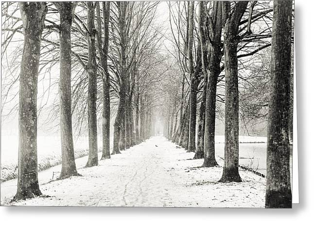 Snow Tree Prints Photographs Greeting Cards - Winter Alley in Rhoon. Holland. Black N White Greeting Card by Jenny Rainbow