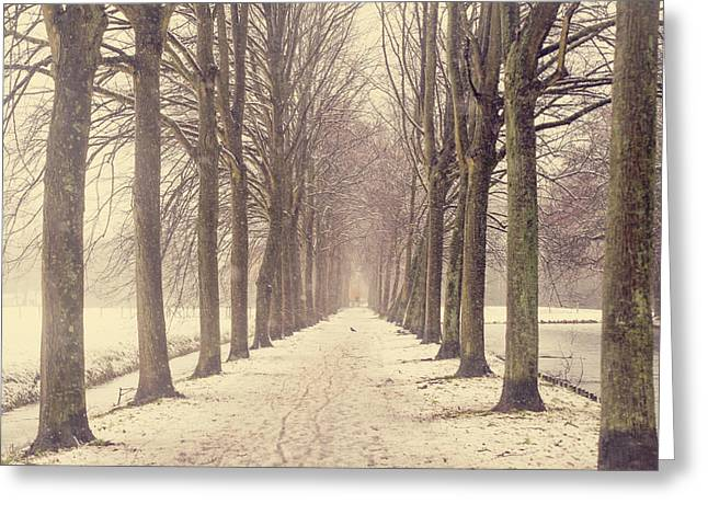 Snow Tree Prints Photographs Greeting Cards - Winter Alley in Rhoon. Holland Greeting Card by Jenny Rainbow
