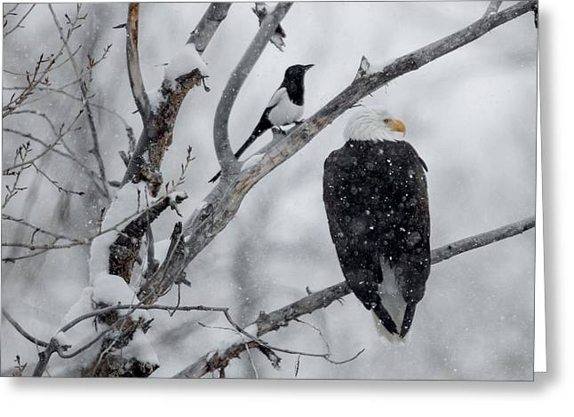 Black-billed Magpie Greeting Cards - Winter Allies Greeting Card by Sandy Sisti