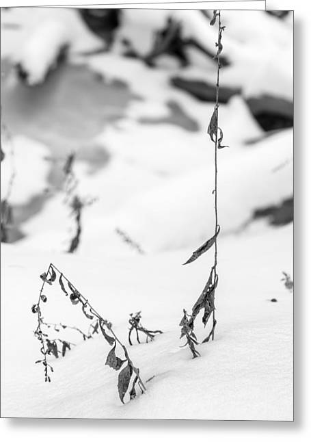 Petrifying Springs Greeting Cards - Winter Along the Riverbank in Black and White Greeting Card by Chris Tobias