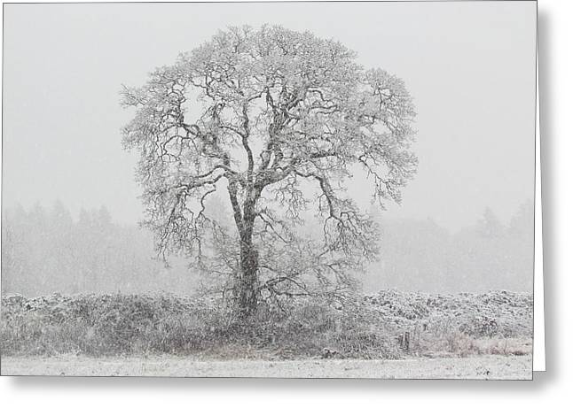 Winter Trees Greeting Cards - Winter Greeting Card by Angie Vogel