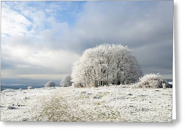 Wintry Photographs Greeting Cards - Winter Greeting Card by Anne Gilbert
