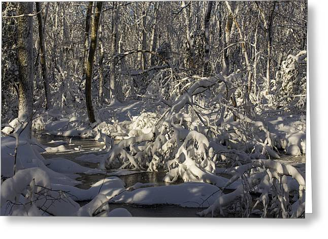 Winter at Borden Brook Greeting Card by Andrew Pacheco