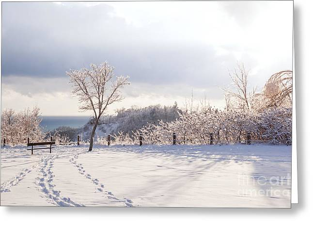 Wintry Photographs Greeting Cards - Winter at Scarborough Bluffs Greeting Card by Elena Elisseeva