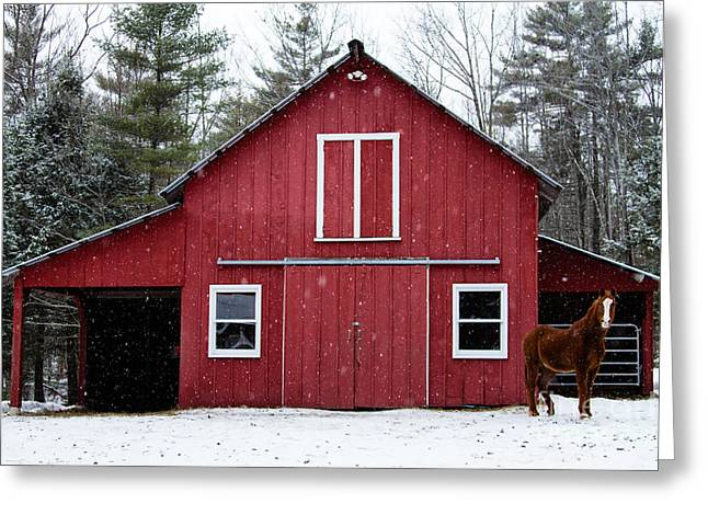 Grazing Snow Greeting Cards - Winter at the Barn Greeting Card by Dawna  Moore Photography