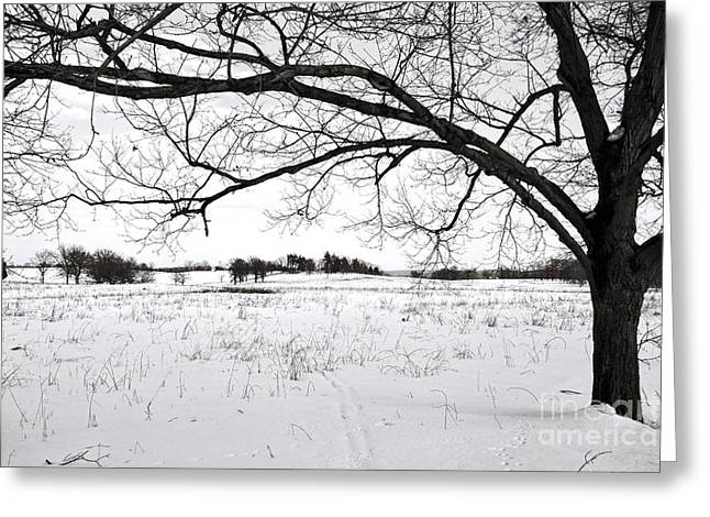 Winter Trees Greeting Cards - Winter at Valley Forge Greeting Card by Olivier Le Queinec