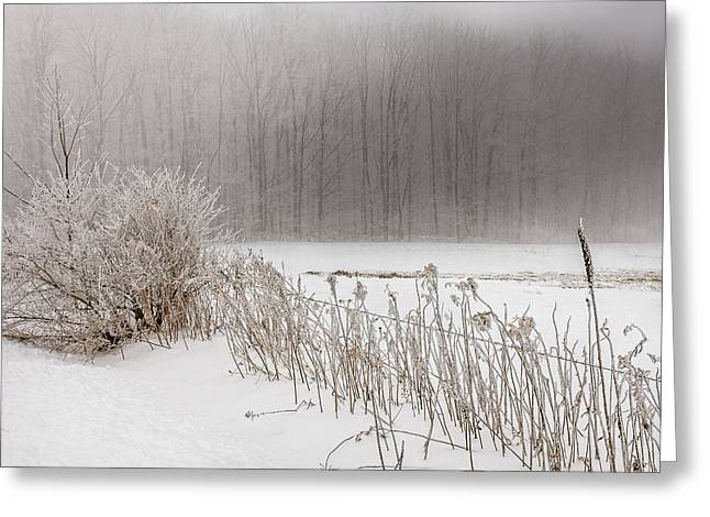 Mist Photographs Greeting Cards - Winter barbed wire fence Greeting Card by Chris Bordeleau