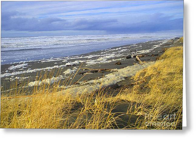 """storm Prints"" Greeting Cards - Winter Beach Greeting Card by Jeanette French"