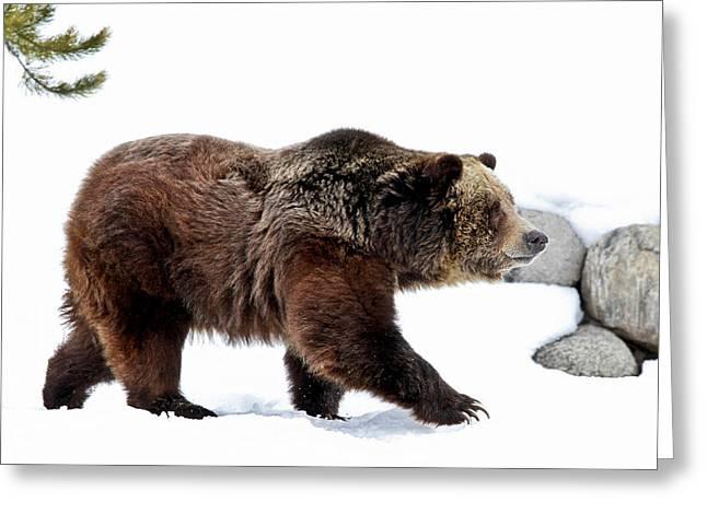 Winter Bear Walk Greeting Card by Athena Mckinzie