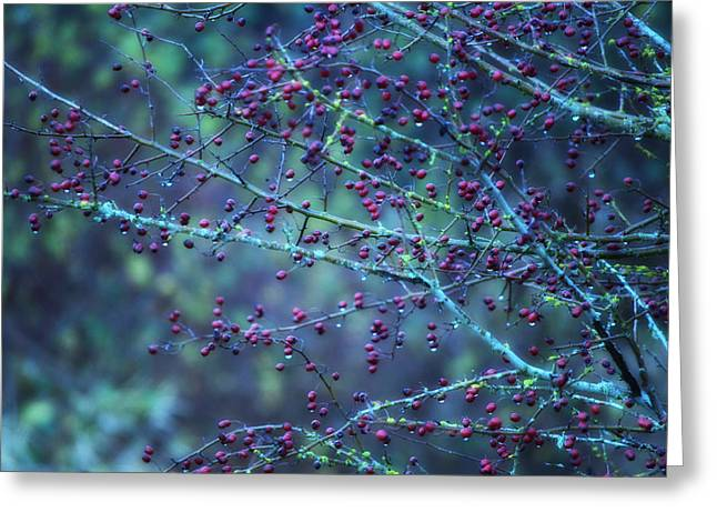 Vancouver Mixed Media Greeting Cards - Winter Berries Greeting Card by Heather L Giltner
