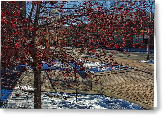 Winter Berries Greeting Card by Baywest Imaging