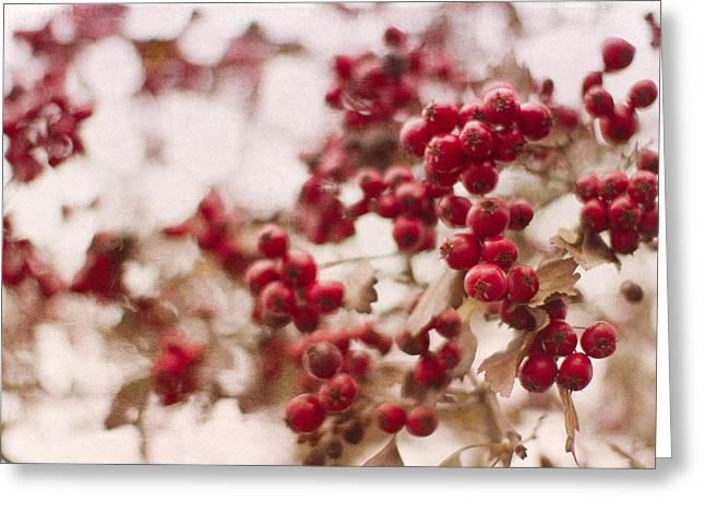 Red Berries Greeting Cards - Winter Berries Greeting Card by Rebecca Cozart