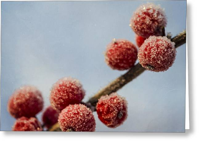 Winterly Forest Greeting Cards - Winter berries Greeting Card by TouTouke A Y