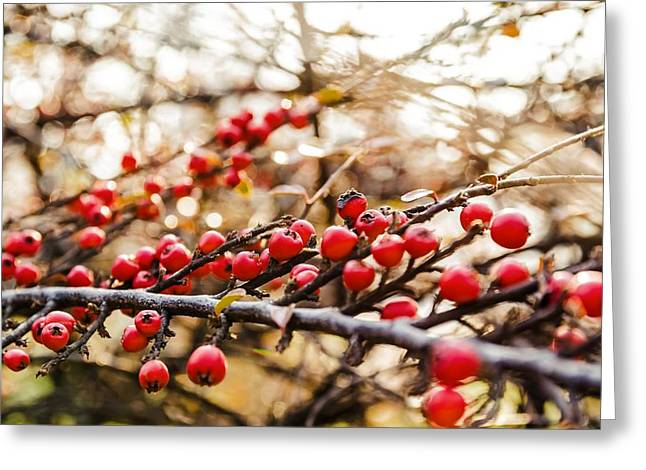 Winterly Forest Greeting Cards - Winter berryes. Greeting Card by Slavica Koceva
