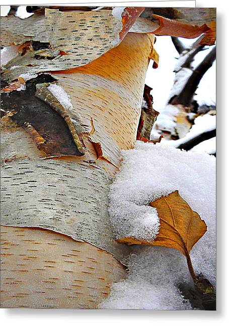 Bare Trees Greeting Cards - Winter Birch 2 Greeting Card by Julie Palencia