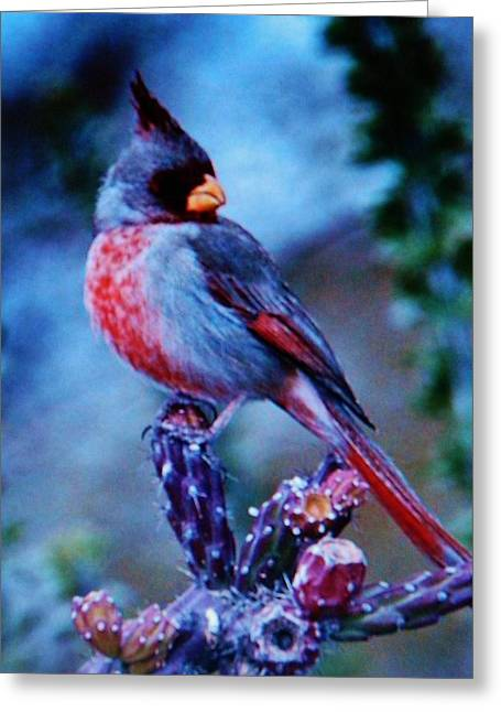 Natur Bilder Plakaten Kunst Greeting Cards - Winter Bird Greeting Card by Gunter  Hortz