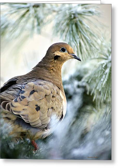 Winter Bird Mourning Dove Greeting Card by Christina Rollo